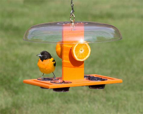 deluxe oriole jelly feeder gazebo bird feeder oriole