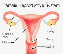 Reproductive System Mrs Andrews 39 7th Grade Life Science
