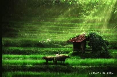 Rain Animated Graphics Rainy Greetings Raining