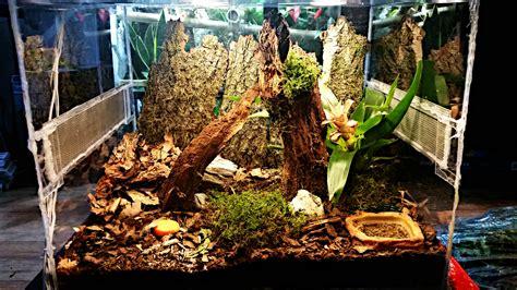 fauchschaben terrarium terraonde