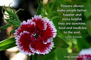 Inspirational Quotes Flower God. QuotesGram