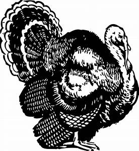 Black And White Turkey Clip Art - ClipArt Best