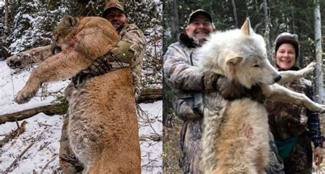 wolf picture sparks  stupid comments  anti hunters