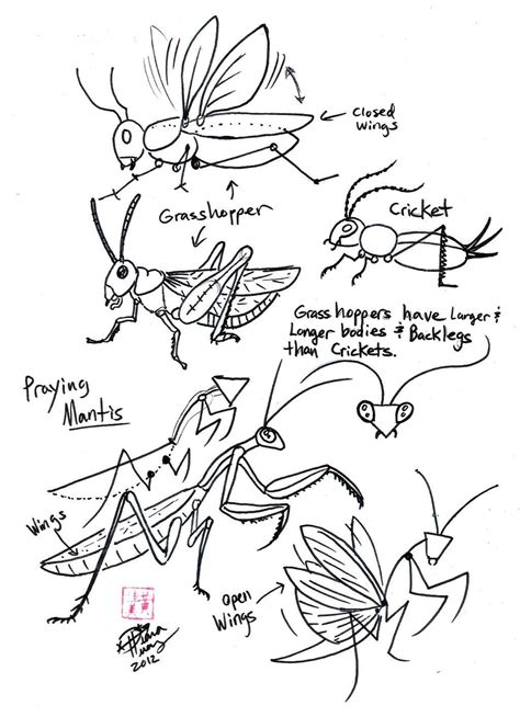 how to draw a ladybug draw grasshopper cricket and praying mantis by diana 6786
