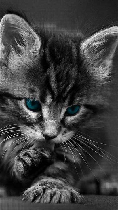 Cat Phone Cats Wallpapers Kitten Cell Mobile