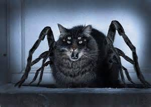scary cat pictures scary cat cats picture