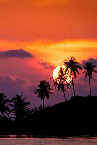Beautiful Beach Sunset Palm Trees Hawaii