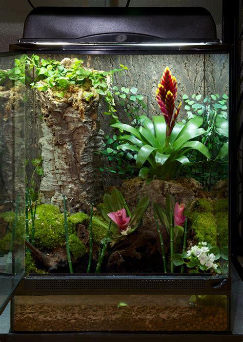 accessories terrarium tropical plants interior