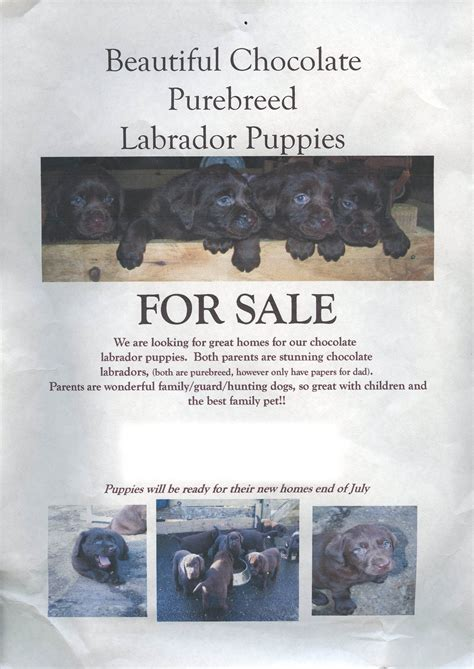 Puppy For Sale Flyer Templates by Pin For Sale Flyer Free Word Template On