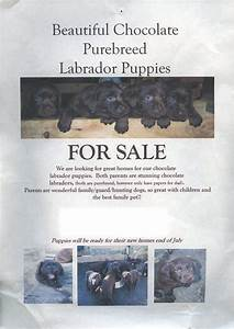 puppies for sale flyer template arts arts With puppy for sale flyer templates