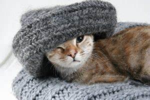 Katzenhaare Entfernen Kleidung : katzenhaare entfernen so geht es richtig die besten tipps tricks ~ Orissabook.com Haus und Dekorationen