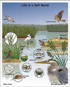 The Wetlands Web
