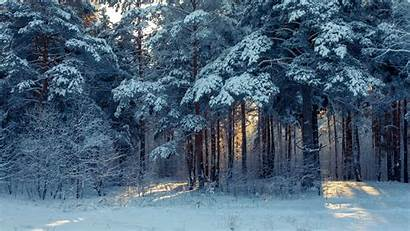 Winter Forest Landscape Snow Wallpapers Trees Nature