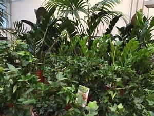 Warum Sind Pflanzen Grün : blumen rampp das neue gr n warum wir mit pflanzen besser wohnen und arbeiten ~ Markanthonyermac.com Haus und Dekorationen