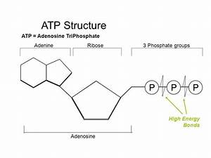 What Is Structure Of Atp