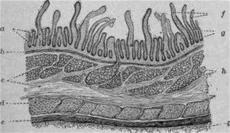 structure   small intestine