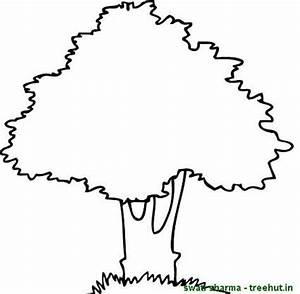 Mango Tree Colouring Pages - ClipArt Best