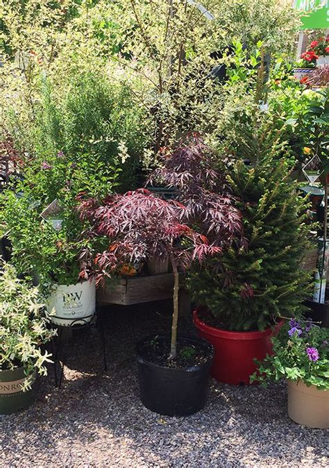 Gardeners Supply Hours Williston by 29 Best Gardener S Supply Garden Centers Images On