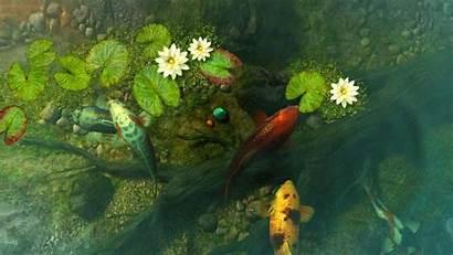 Koi Pond Fish Screensaver 3d Garden Wallpapers