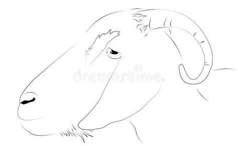 Goat As Line Drawing Stock Illustration. Image Of Image Flow Chart In Excel Mac Contoh Flowchart Toko Baju Program C++ Fungsi Website Berwudhu Contohnya Gambar Dan Fungsinya