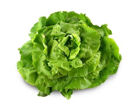 cuisiner la salade verte image gallery salade verte
