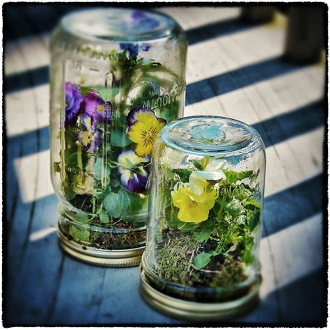 jar terrarium designing life let s play with dirt let s make terrarium