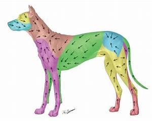 Dog Lymph Nodes Location