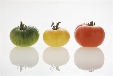 cuisine innovation food innovation home