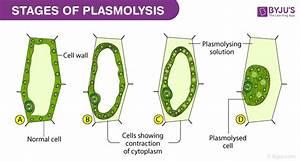 Study Of Plasmolysis In Epidermal Peels