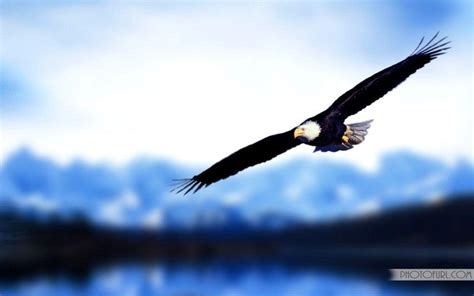 Animated Eagle Wallpaper - free eagles wallpapers wallpaper cave