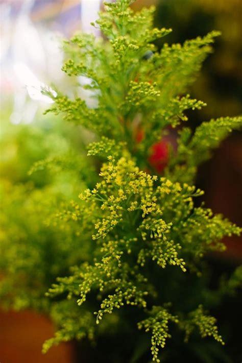 ideas  inexpensive wedding flowers