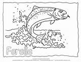 Trout Coloring Rainbow Fish Drawing Pages Outline Printable Jumping Animal Forelle Realistic Adult Ausmalbilder Water Template Malvorlagen Malvorlage Mit Detailed sketch template