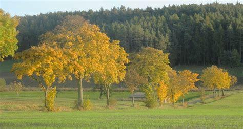 Em Garten Im Herbst by Em Anwendungen Im Herbst Plants Gartenblog