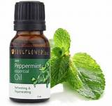 Uses For Peppermint Oil Images