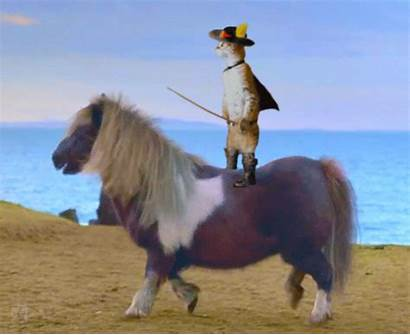 Riding Horse Cat Pony Gifs Giphy Animated