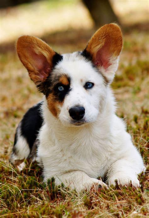 Augi - My Dog Breeders - Part 55