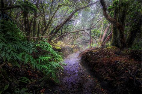 earth fern fog forest path rainforest tropical wallpaper