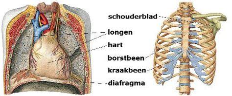 Pijn onder onderste rib rechts