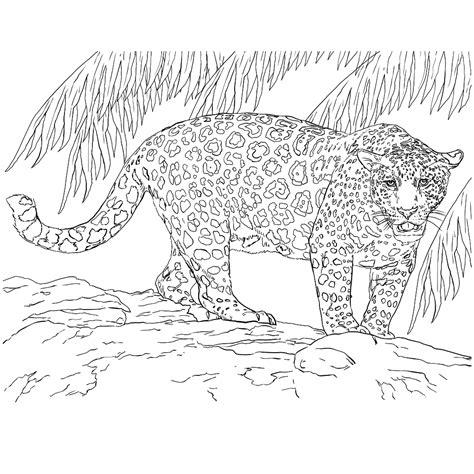 Kleurplaat Lazarus Leeft by Leuk Voor Een Jaguar Leeft In Het Oerwoud