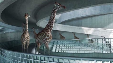 High Diving Giraffes - YouTube