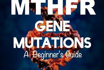 Mthfr Mommypotamus Gene Mutation Swear Nuggets Paleo