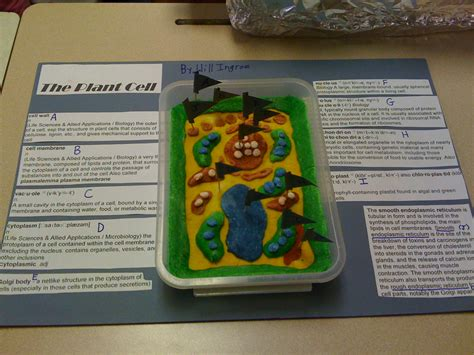 Pictures of Plant Cell Model Project Non Edible - #catfactsblog