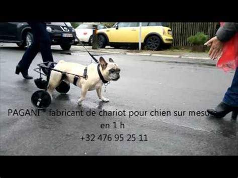 chaise roulante pour handicape chariot sur mesure pour chien handicape