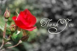 Thank You Flowers – WeNeedFun