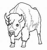 Bison Coloring Buffalo Animal Bill Bills Bullet Printable Animals Coloriage Animaux Colorier Dessins Nord Getcolorings Realistic Imprimer Sheets Et Rocks sketch template