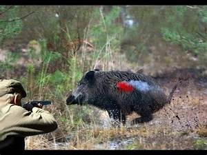 You Tube Chasse : chasse au sanglier wild boar hunting battue sanglier youtube ~ Medecine-chirurgie-esthetiques.com Avis de Voitures