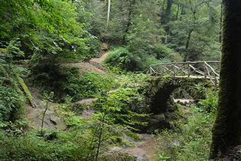 location chaise roulante luxembourg mullerthal trail photo de mullerthal trail mullerthal