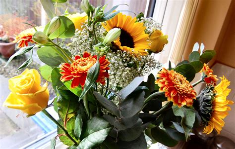 Flowers For Windowsill by File Flickr Ronsaunders47 A Bunch Of Flowers On The