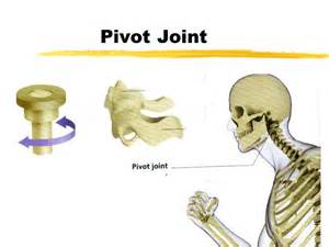2020 other | images: pivot joint neck diagram, Human Body