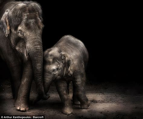 elephants   forget  family moments